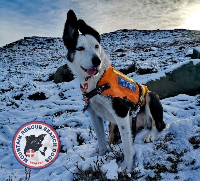 Buried In Snow, This Man Films A Mountain Rescue Dog Saving Him And It's Lovely