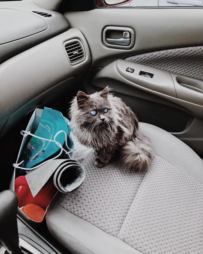 Meet Merlin, The Water-Bottle-Sized 2-Year-Old Kitty That Is Taking Over Twitter Because Of His Pure Beauty