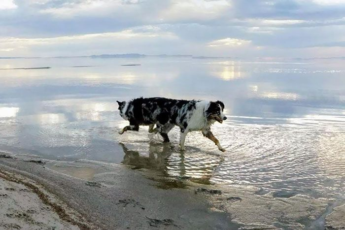 60 Hilarious Animal Panorama Fails
