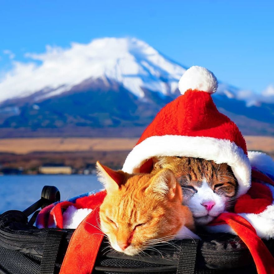Owner Takes His 2 Cats On His Travels Around Japan And Their Instagram Is Purrfect