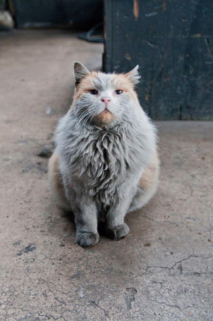 Meet 'Dirt', The Nevada Railway Cat That Always Looks Like He Needs A Bath