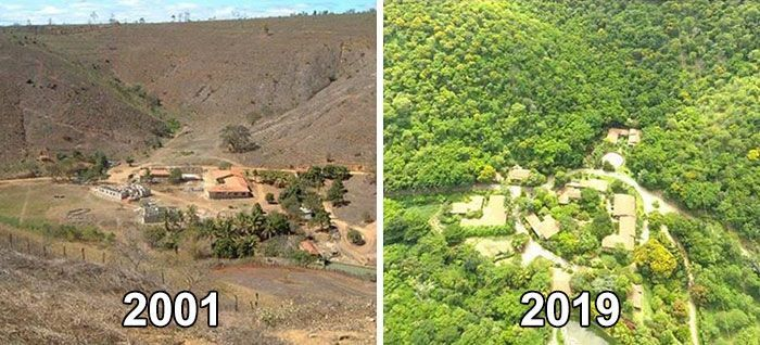 Photographer And His Wife Plant 2 Million Trees In 20 Years To Restore A Destroyed Forest And Even The Animals Have Returned