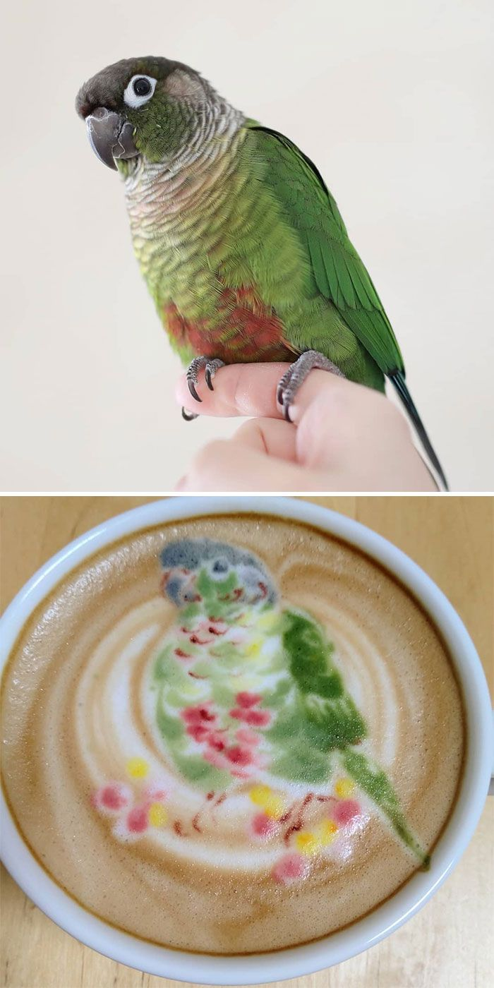 30 Pics Of Amazing Bird Latte Art By Japanese Artist