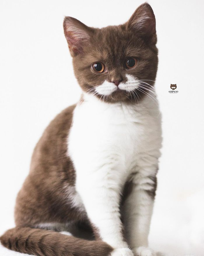 Meet Gringo, The Cat Who Mustached His Way Into Our Hearts