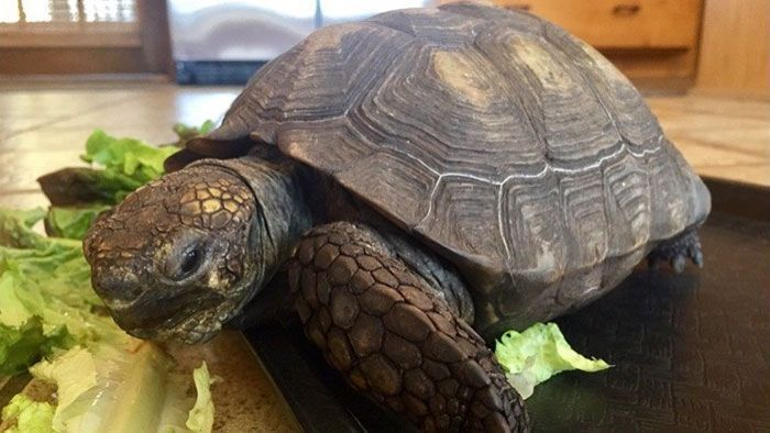 Woman Received A Pet Tortoise For Her 10th Birthday And They've Been Together For 56 Years