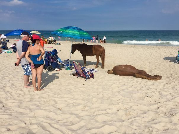 34 Times People Were Surprised By Things They Saw On The Beach