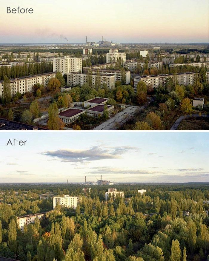 68 Photos Of Mother Nature Reclaiming The Territory Around Chernobyl