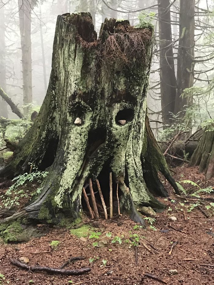 74 Of The Most Interesting Things People Found In The Woods