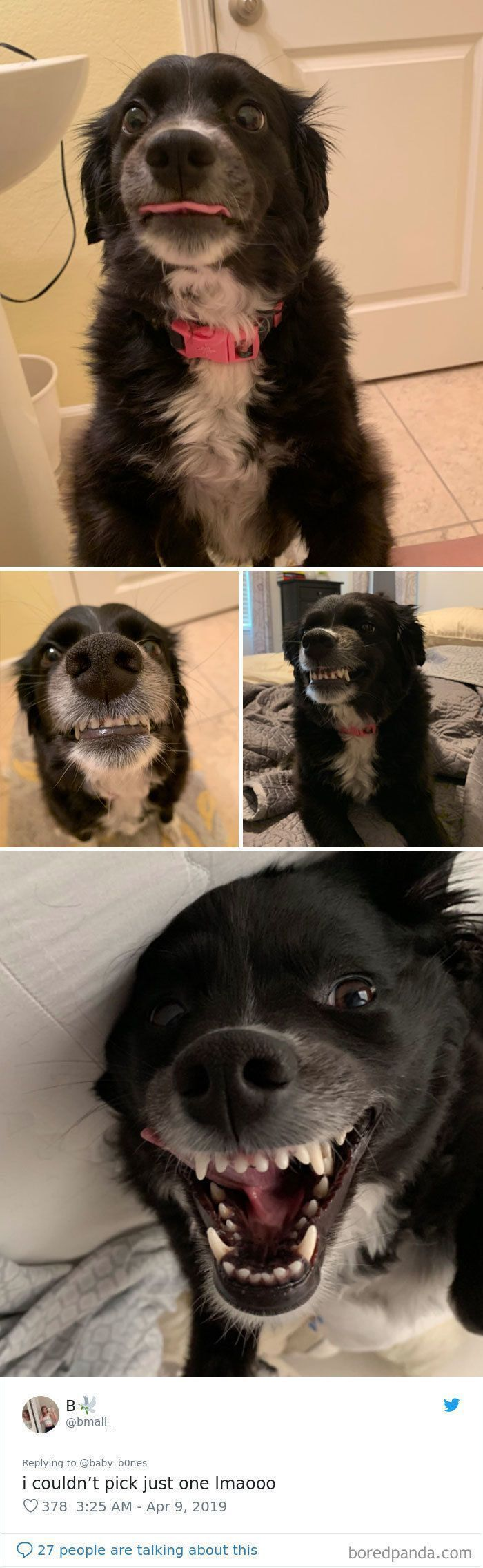 People Are Sharing The Most Unflattering Pics Of Their Pets And It's Hilarious (30 Pics)