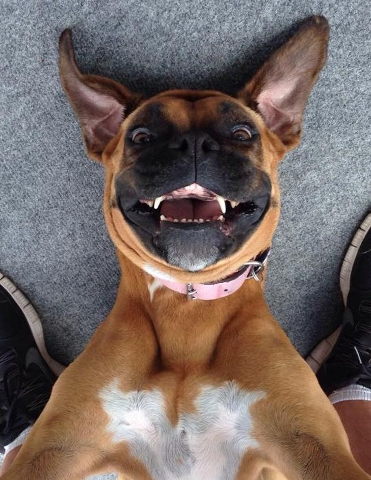 20+ Pets Who Can Pose Better Than a Selfie Queen