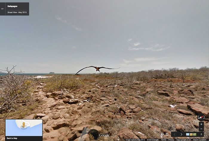 54 Best Accidental Animal Pics On Google Street View