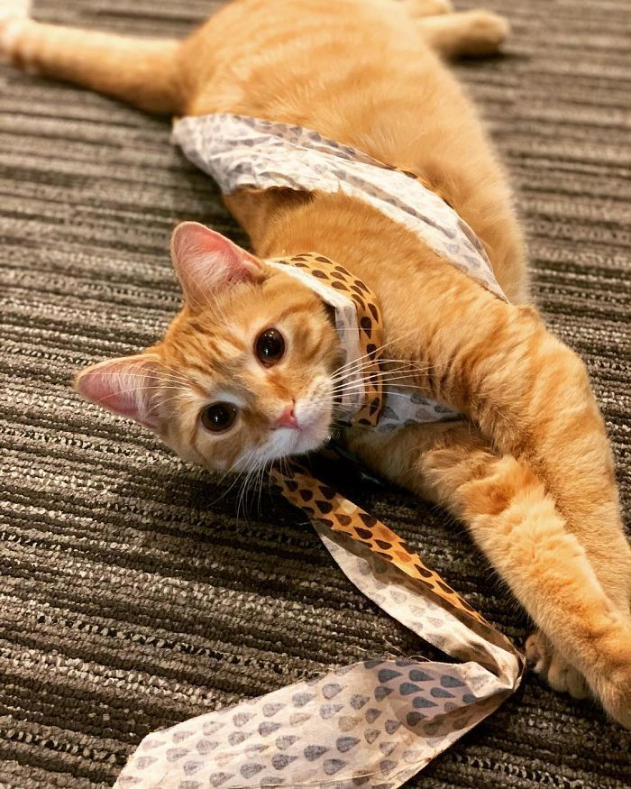 Company Adopts 2 Office Kittens, Debit And Credit, To Boost Employee Morale, Succeeds Perfectly (21 Pics)