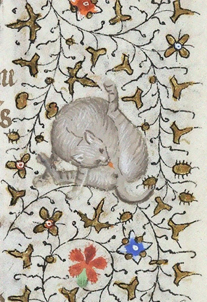 Apparently Medieval People Found Cats Licking Their Butts Fascinating And Here Are 14 Pics As Proof