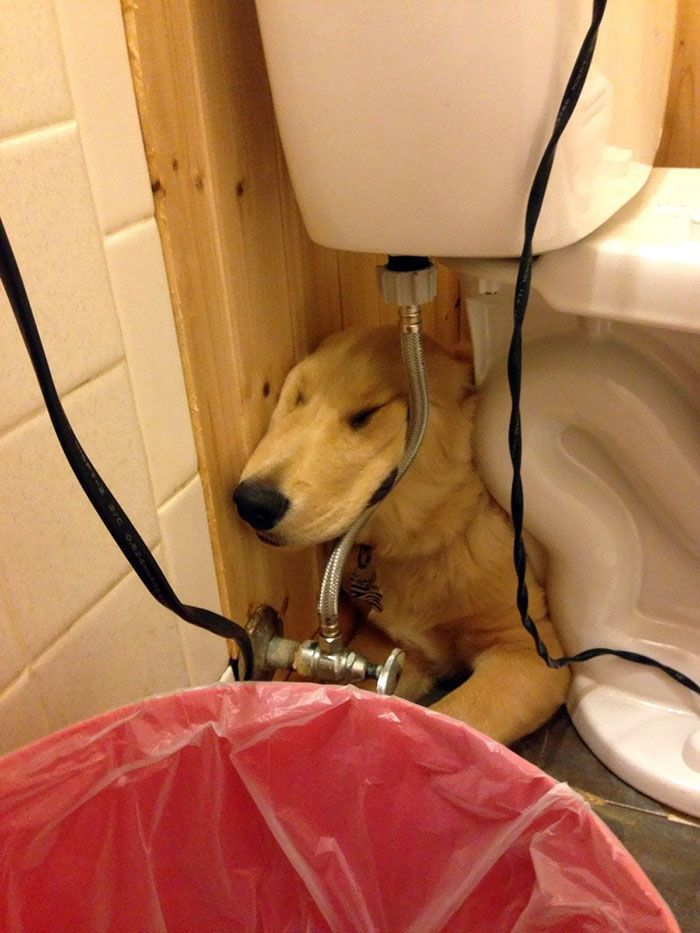 50 Times Dogs Managed To Fall Asleep In Hilariously Awkward Positions