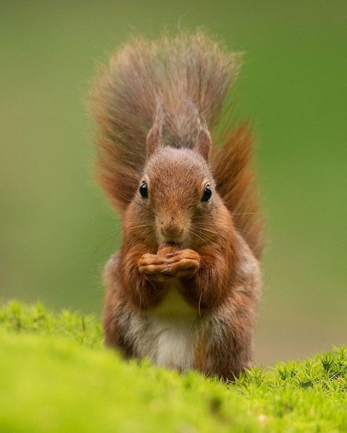 Dutch Photographer Goes Viral With Photos Of Ground Squirrels Smelling Flowers And Here Are His 52 Best Pics