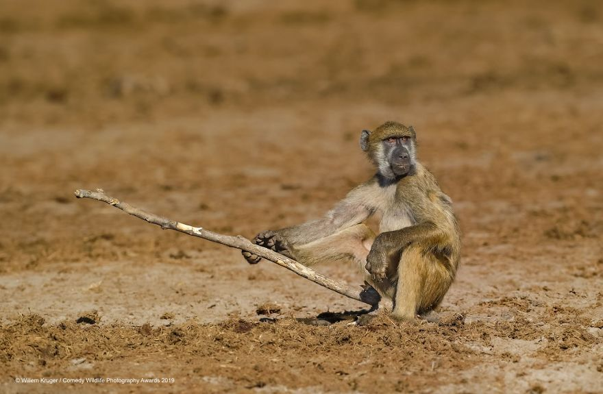 40 Funniest Finalists Of The Comedy Wildlife Photography Awards 2019