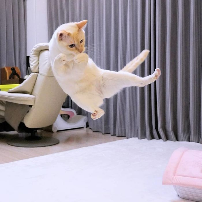 "People Are Falling In Love With This ""Dancing"" Japanese Cat"