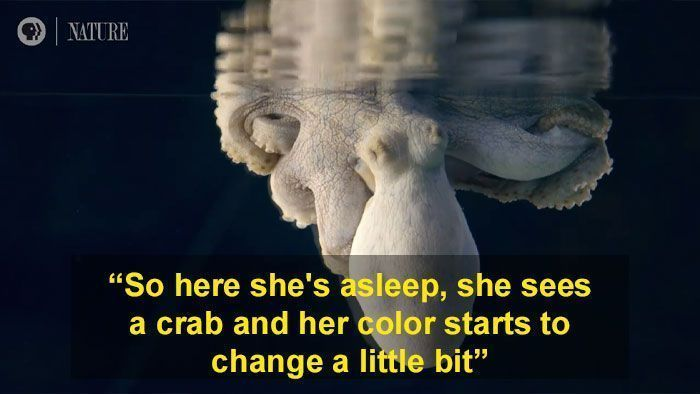 Someone Films This Octopus Changing Colors While Dreaming And It's Spectacular