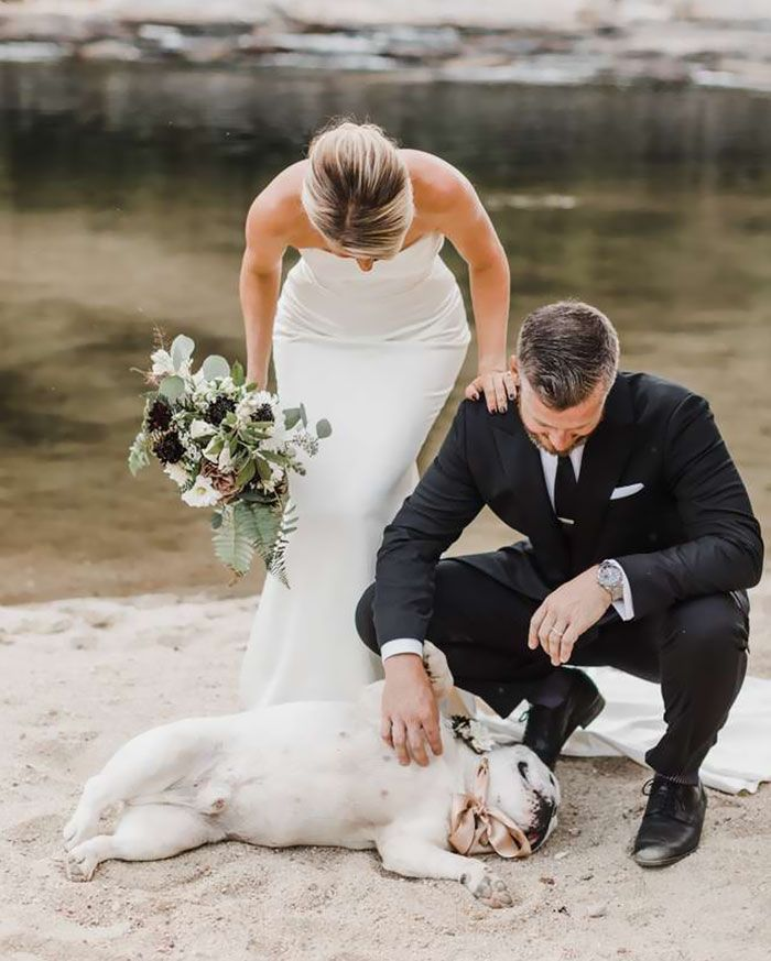 Adorable Dog Steals The Show During Owners' Wedding Photoshoot