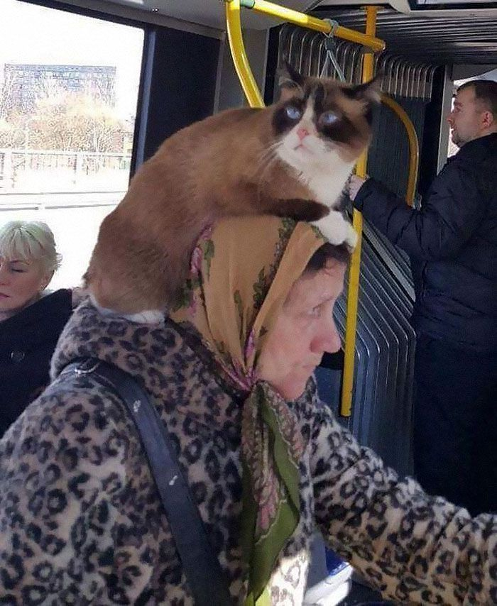 This Instagram Account Collects Funny And Strange Things Spotted On Public Transport (40 Pics)