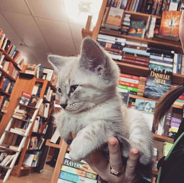 This Bookstore In Canada Is Full Of Cute Kittens That Customers Can Play With And Even Adopt