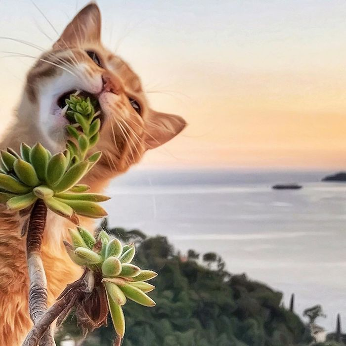 Italian Woman Beautifully Documents Her Cat's Everyday Life (36 Pics)