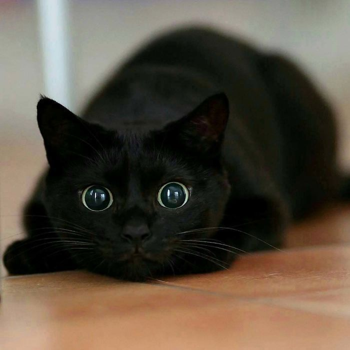40 Wholesome Pics Of Black Cats To Show They Have Nothing To Do With Bad Luck