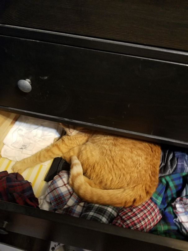 50 Times Cats Fell Asleep In Hilarious Places (New Pics)