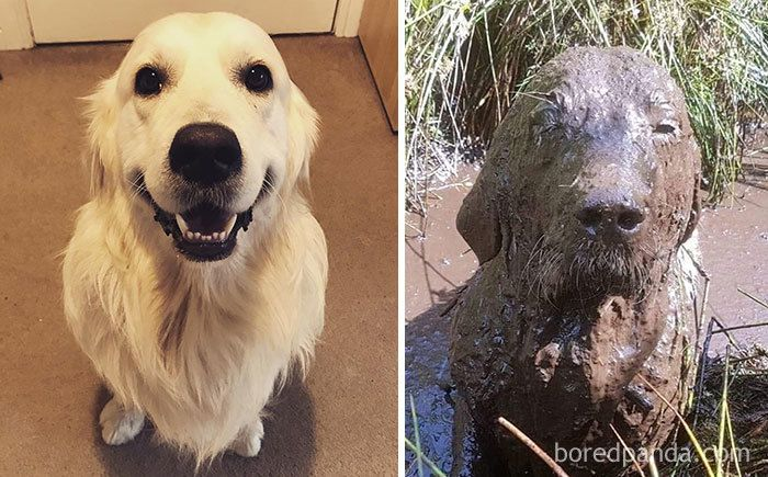85 Reasons You Should Never Let Your Dog Play In The Mud (New Pics)