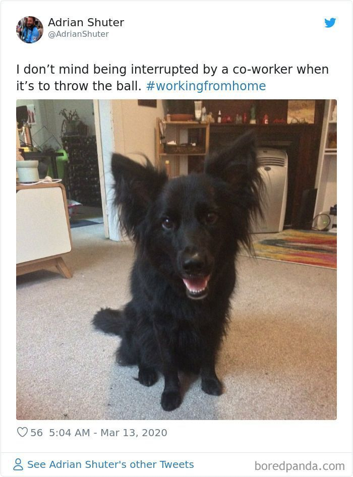 People Working From Home Share Pics Of Their 'New' Four-Legged Coworkers In 70 Adorable Posts