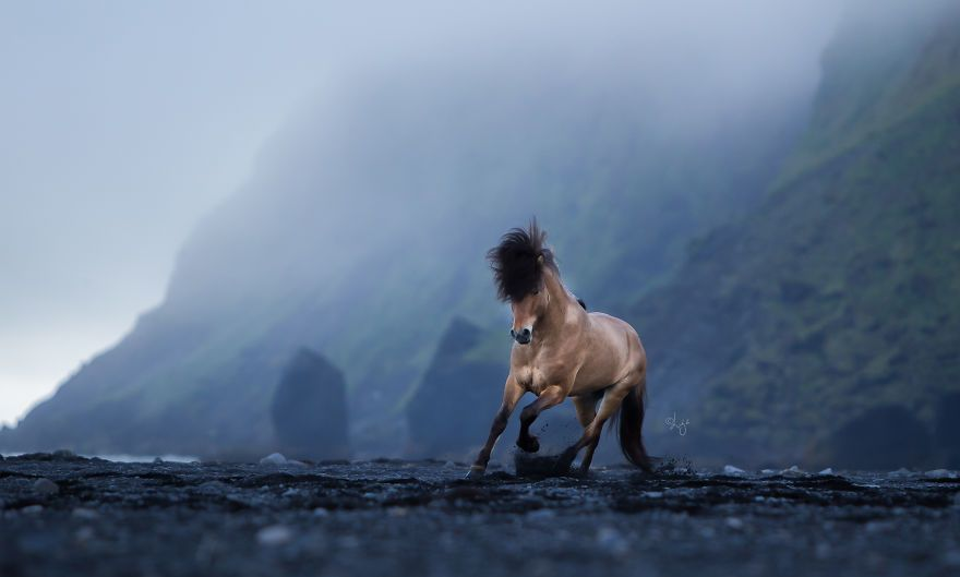 My 59 Equine Photos In Mesmerizing Icelandic Landscape