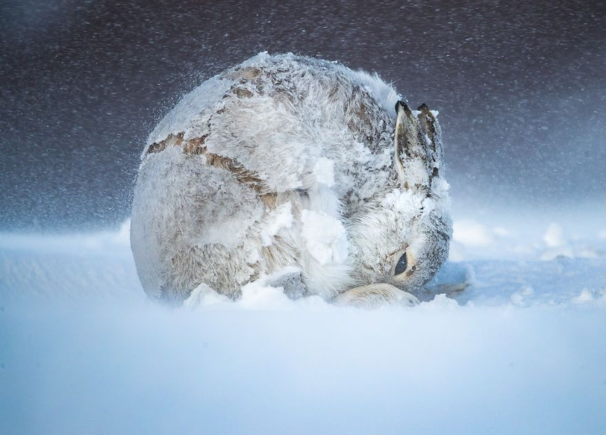 30 Of The Best Shots From The 2020 BigPicture Natural World Photography Competition