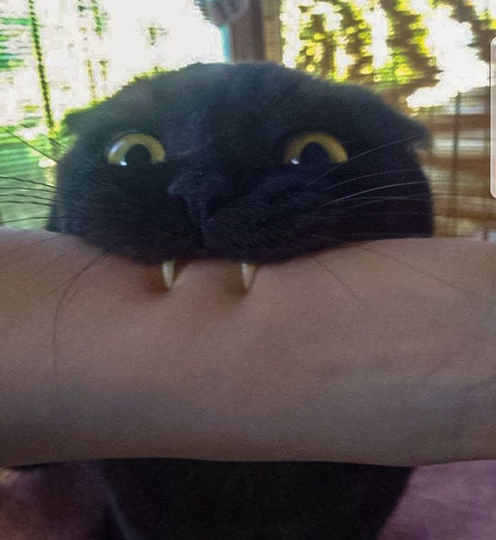 40 Times Cat Owners Got Fascinated By Their 'Teefies'