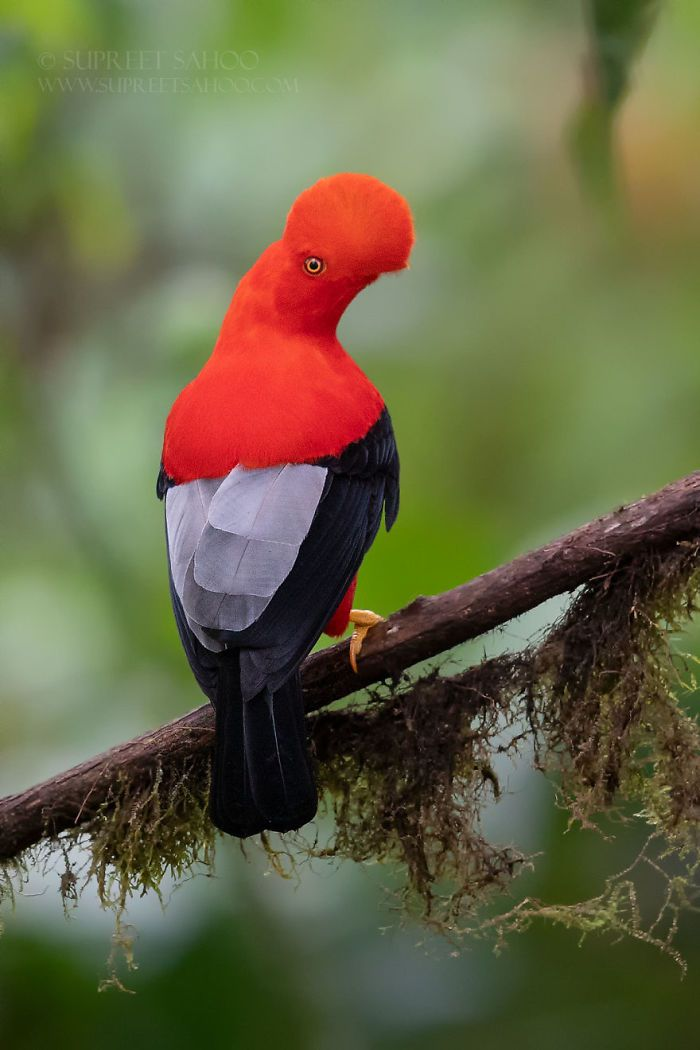 50 Majestic And Unique Birds That Amaze People With Their Beauty
