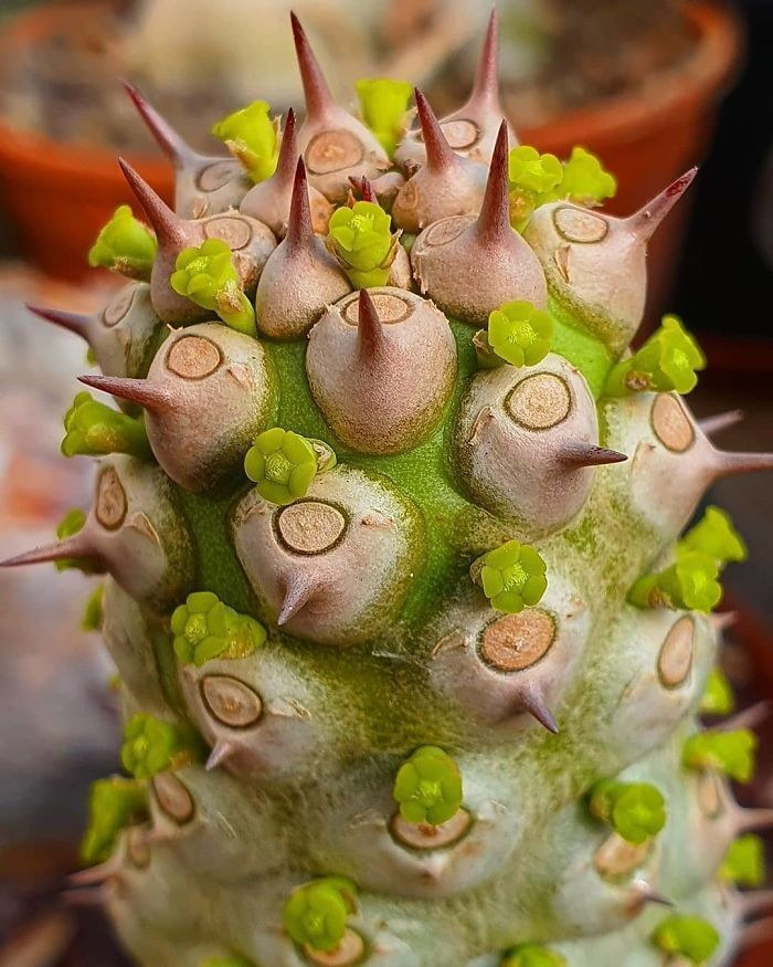 69 Bizarre Succulents That Look Like They're From An Alien Planet