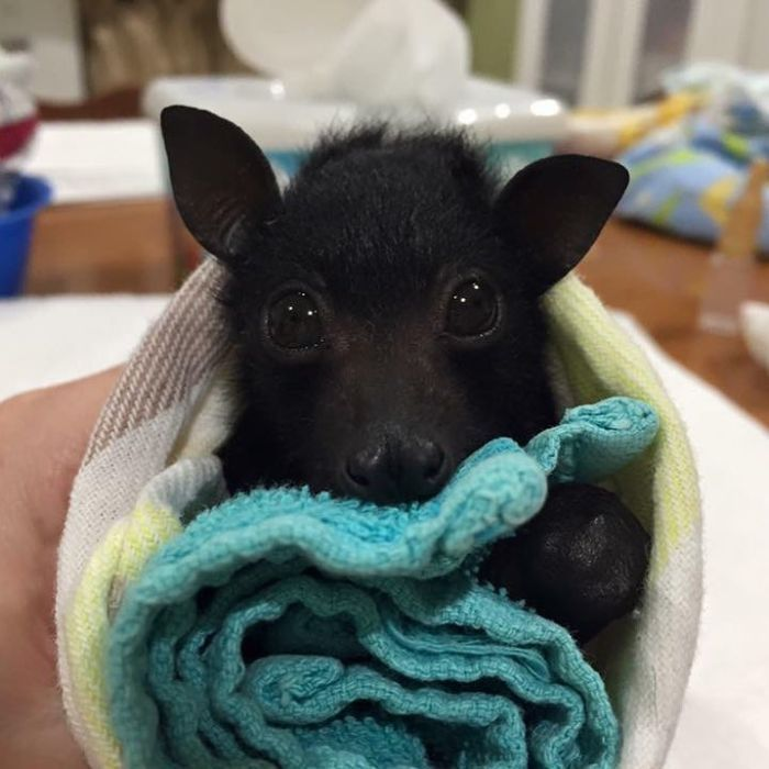 This Instagram Account Posts Photos And Videos To Prove Bats Are Adorable (40 Pics)