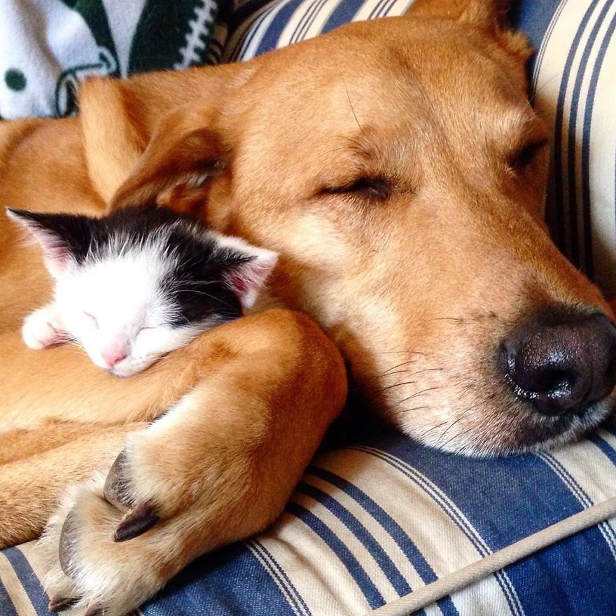 Dog Takes Care Of Every Rescue Kitten In This Cat Shelter And Here Are 40 Pics To Show His Love Is Never-ending
