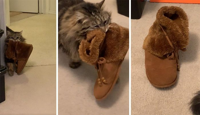 125 Of The Funniest Cat Posts That Are Impossible Not To Laugh At (New Pics)