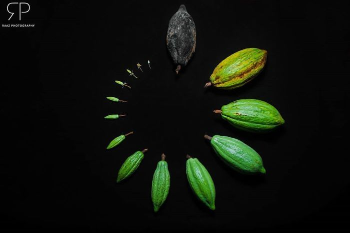 People Are Sharing Aesthetically Pleasing Photos Of The Life Cycles Of Living Things (24 Pics)