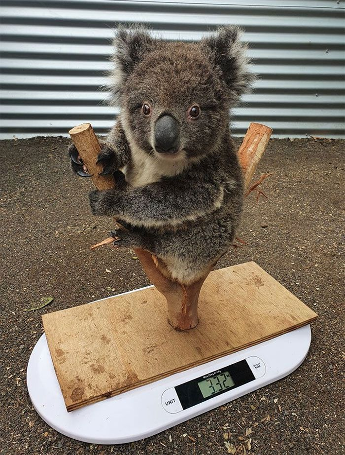 Animal Care Workers Reveal How They Weigh Their Little Pals In 41 Cute Pictures