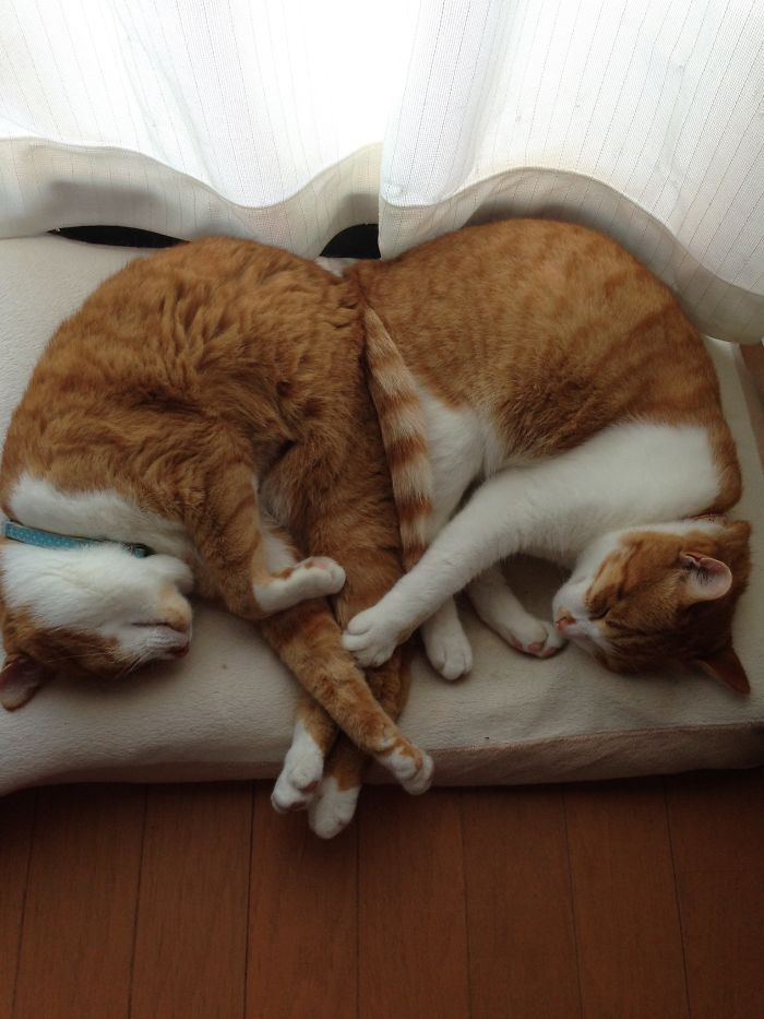 40 Times People Caught Their Cats Sleeping Together In Such Weird Positions, They Just Had To Share The Pics Online