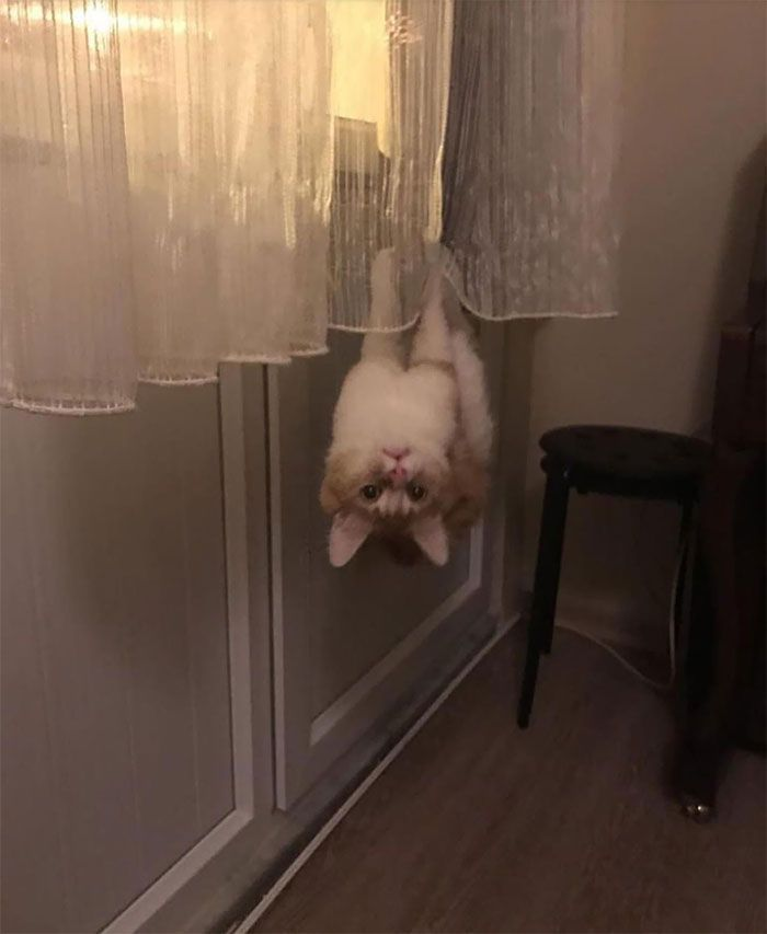 40 Cats Who Decided That Disobeying Their Owners Is Not Enough So They Defied The Laws Of Physics As Well