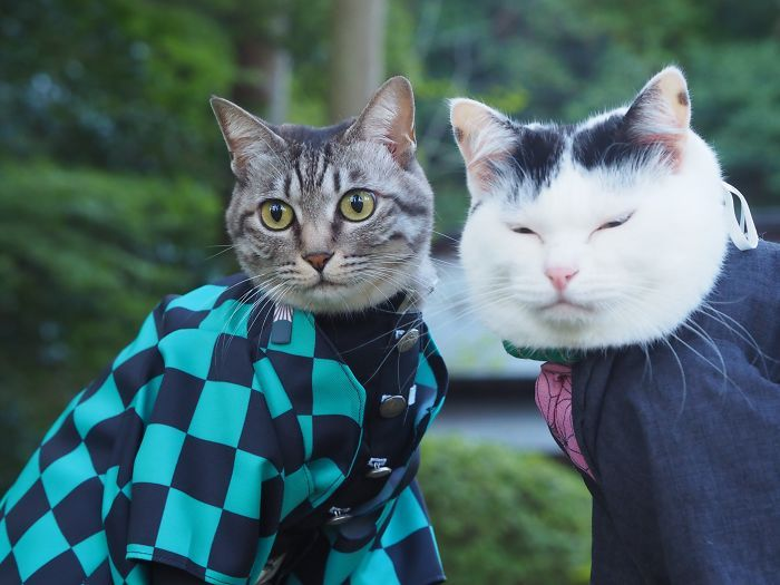 This Guy Likes To Make Anime Costumes For His Cats And Here Are 70 Of The Coolest Ones