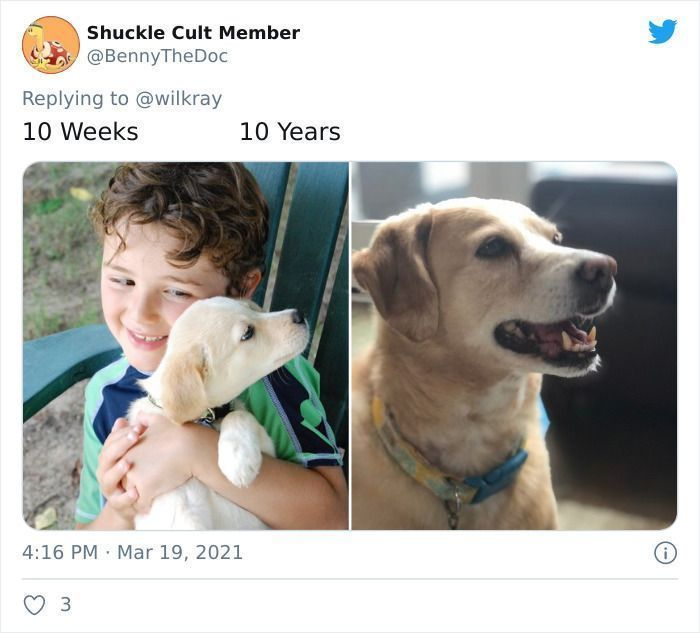 People Are Sharing Sweet 'Then Vs. Now' Photos Of Their Dogs Growing Up Quickly (91 Pics)
