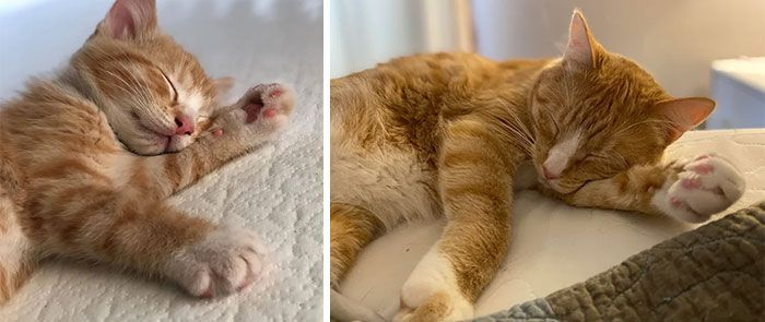 'From Kitten To Cat': People Are Sharing Adorable Side-By-Side Pics Of Their Cats Before And After They Grow Up (63 Pics)