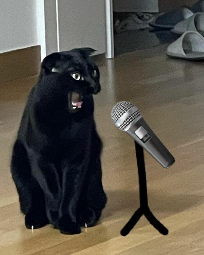 This Black Cat Is So Adorable And Quirky He's Taking Over Instagram (40 Pics)
