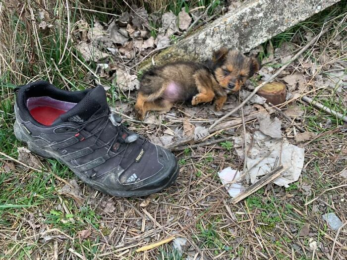 This Man Found A Dog Using A Shoe As Shelter, Saved Him And Gave Him A Home
