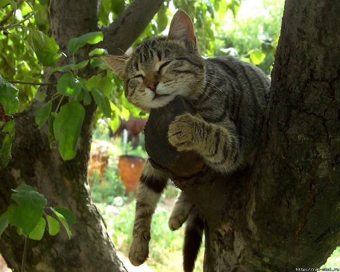 30 Cats Showing Off Their Skills At The Difficult Art Of Sleeping In Trees