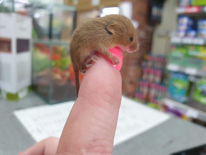 50 Of The Cutest Pics Of Very Smol Animals On Fingers