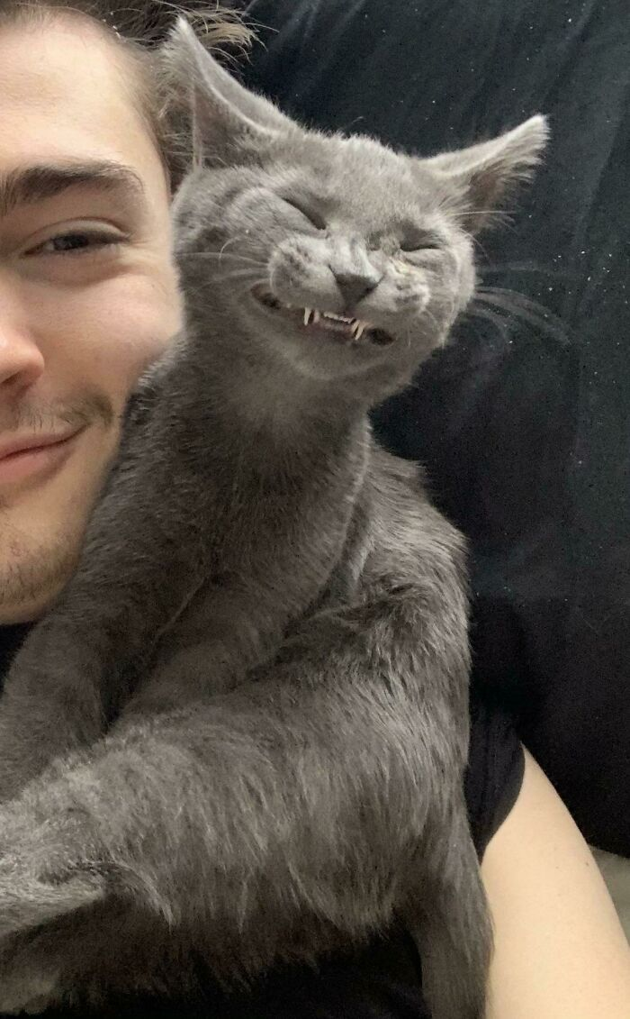 50 Times Cat Owners Got Fascinated By Their 'Teefies' (New Pics)
